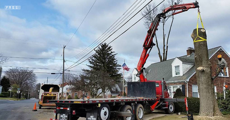 Fassi & Climb High Tree Service LLC